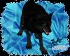 Blue Eyed Black Wolf