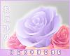 [HIME] Brockie Hip Roses