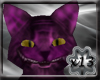 x13 Kitty: cheshire
