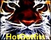 HotOutfits