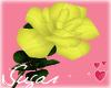 Yellow Rose= Friendship