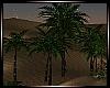 ~Desert Palm Trees~