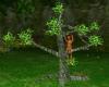Fun Animated Monkey Tree