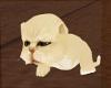 Ma's yelly tabby kitten