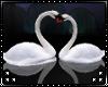 M: Illusion swans Love