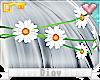 *D* Daisy's Daisies