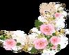 Pink Roses -R