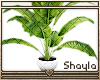 ~S~ Simple Plant 2