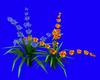 fleur bleu orange