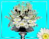 Daisy Flower display