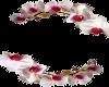 Orchid HP Avi Frame