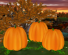Pumpkin Poses