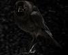 V 3D Wall Black Crow