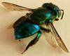 Bunch of Green Flies