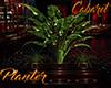 [M] Cabaret Planter