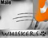 Whiskers :Tango Whskrs M
