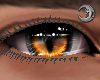 Feline Fire Eyes M