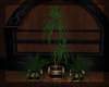 $ CoCo Trio planter