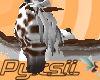 Leopard Pegasus