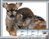 BBC Deer Fur Coat