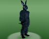 NL2-Frank Rabbit top