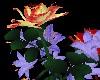 LW - My last roses