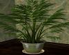Pleasant / Plant 1