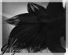 G: Noir leg tuft