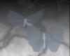 sky butterflies