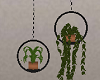 [SM] Hanging Plants 2