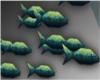 School of tiny fish