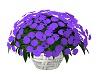 !AS! Purple Flowers