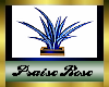 (PRS)PD Palm Plant