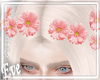 c Pink Daisy Crown