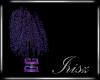 Irisz Willow