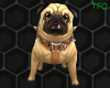 {TFO} Perky Pug Pet