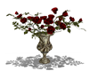 Red Roses Yle