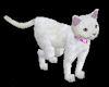 white animated cat