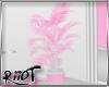 Rosea Plant