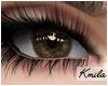 |K Mystic Brown F/M