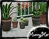 Summerset Plants