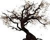 Dragon Leaf Tree
