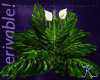 G7 Tropical Plant DRV