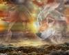 wolfsdream