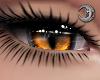 Feline Fire Eyes F