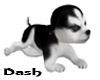 HuskyPuppies[BW]