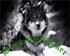 Wolf Tat