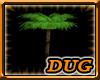 (D) Palm Tree