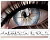 [V4NY] Primula Eyes 03