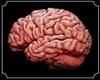 Real Brain Female